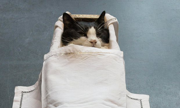'The cat in the coffin almost steals the show' … the Deutsche Börse photography prize