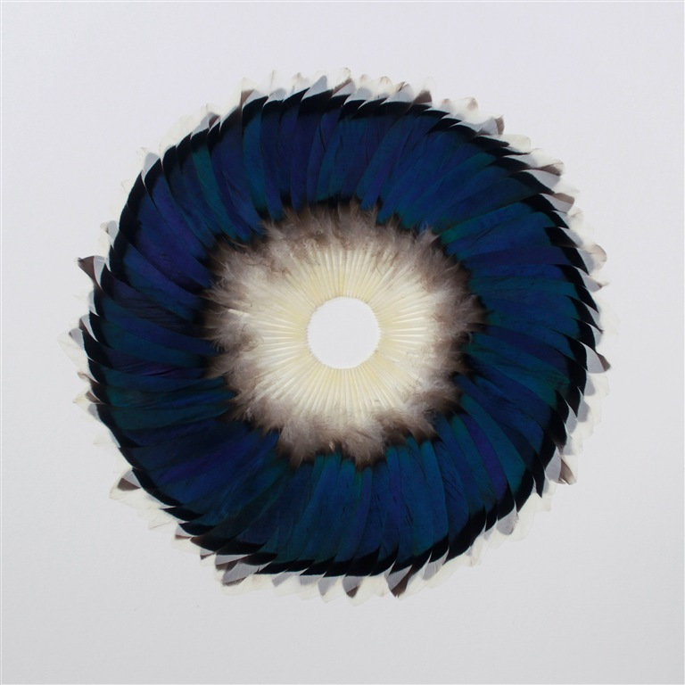 5795 lb1024x768 Preview: Kate MccGwire LURE at All Visual Arts