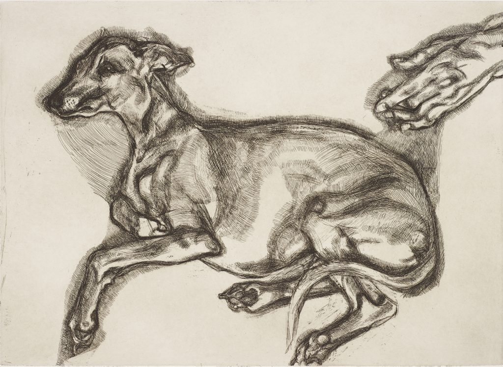 Lucian Freud Pluto Aged 12, 2000 Etching 43.2 x 59.7 cm (plate) 59.7 x 72.4 cm (sheet) edition of 46 (21/46) © Lucian Freud Courtesy Karsten Schubert