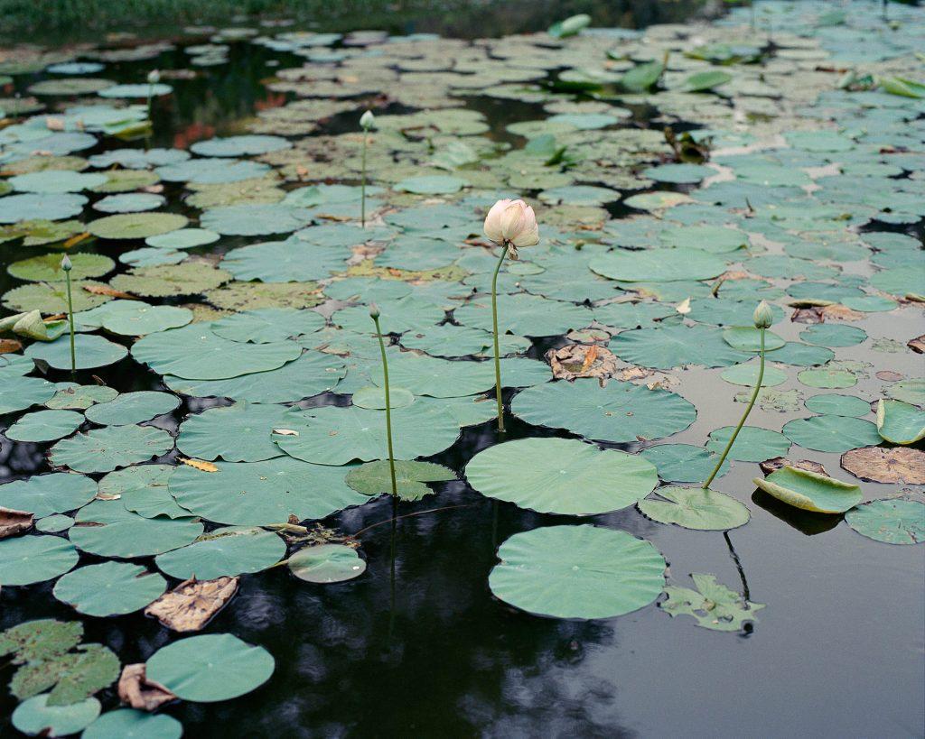 Arpita-Shah-Parimal-Gardens-from-the-series-Nalini