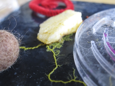 Collective-Slime-Mould-Experiment-with-the-MA-Art-and-Science-at-Central-Saint-Martins-2011-©-Heather-Barnett-and-slimoco-2011