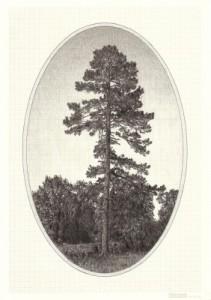 Family-Tree-I-282x400