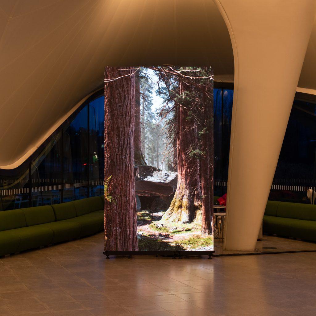 Jakob Kudsk Steensen, installation image of Catharsis (2019-2020) Photo: Hugo Glendinning