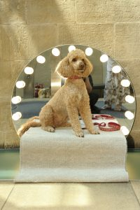 FAD MAGAZINE Konstantin Grcic Paramount: Architecture for a Toy Poodle, 2012 Photo credit: Joel Fildes
