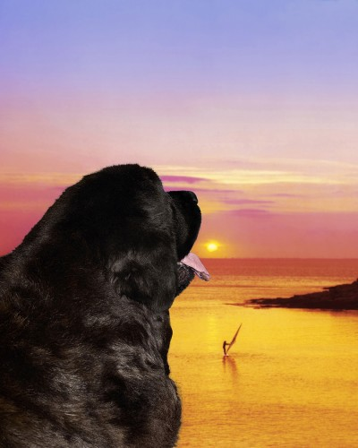 Le-meilleur-ami-du-chien-Shes-Out-Of-My-Life1-400x500