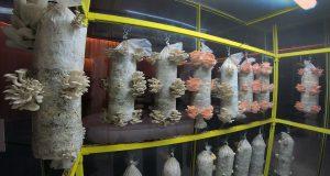 Food Exhibition -Mushrooms V&A