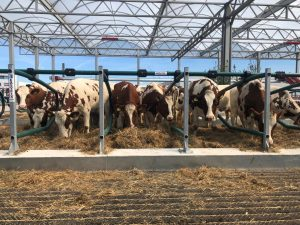 Yesterday, 32 cows took up residence in the world's first floating farm in Rotterdam.