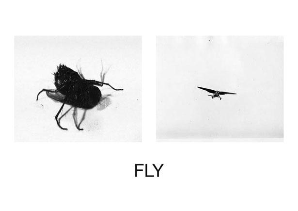 FLY TEMP