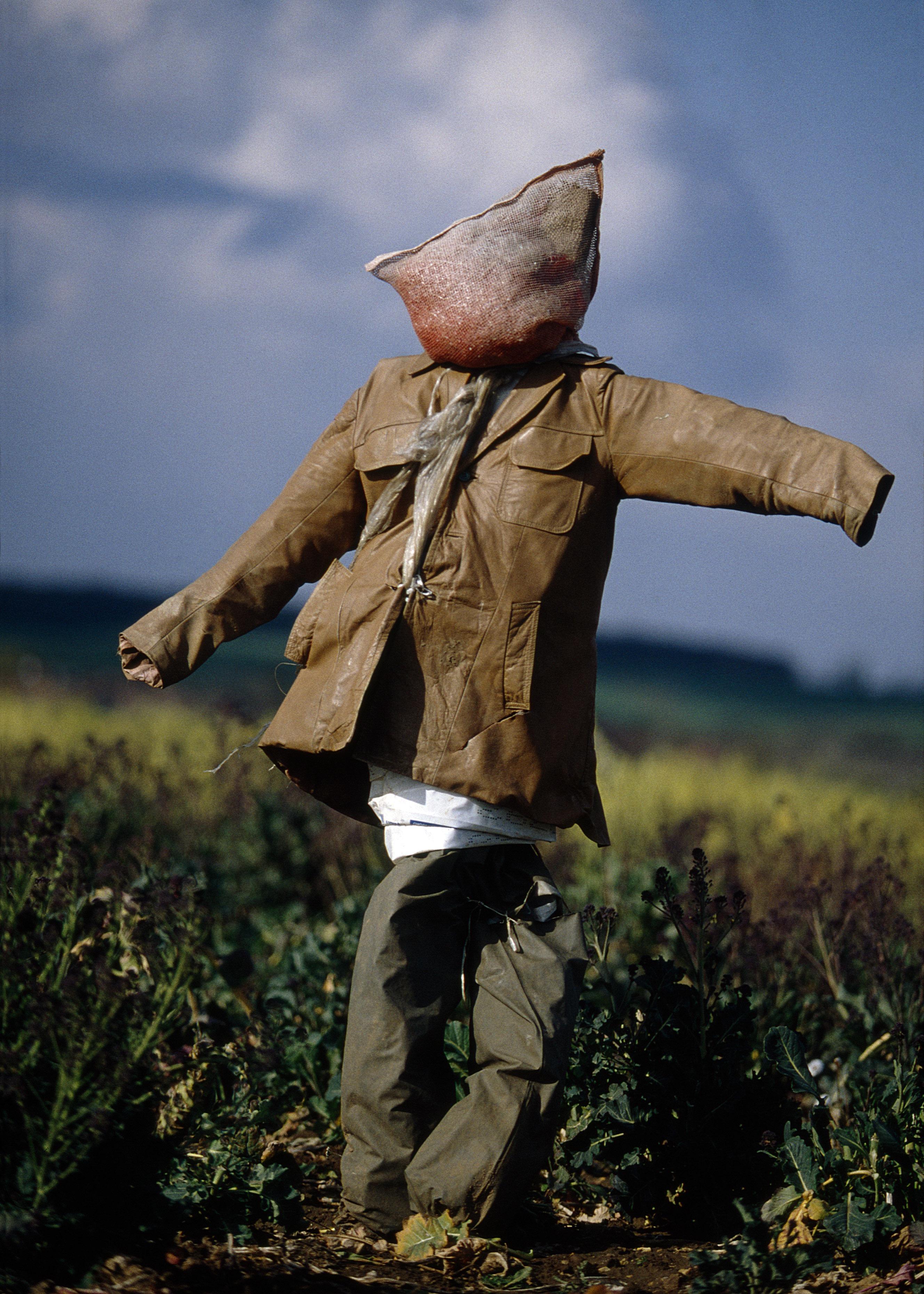 Scarecrow (11)