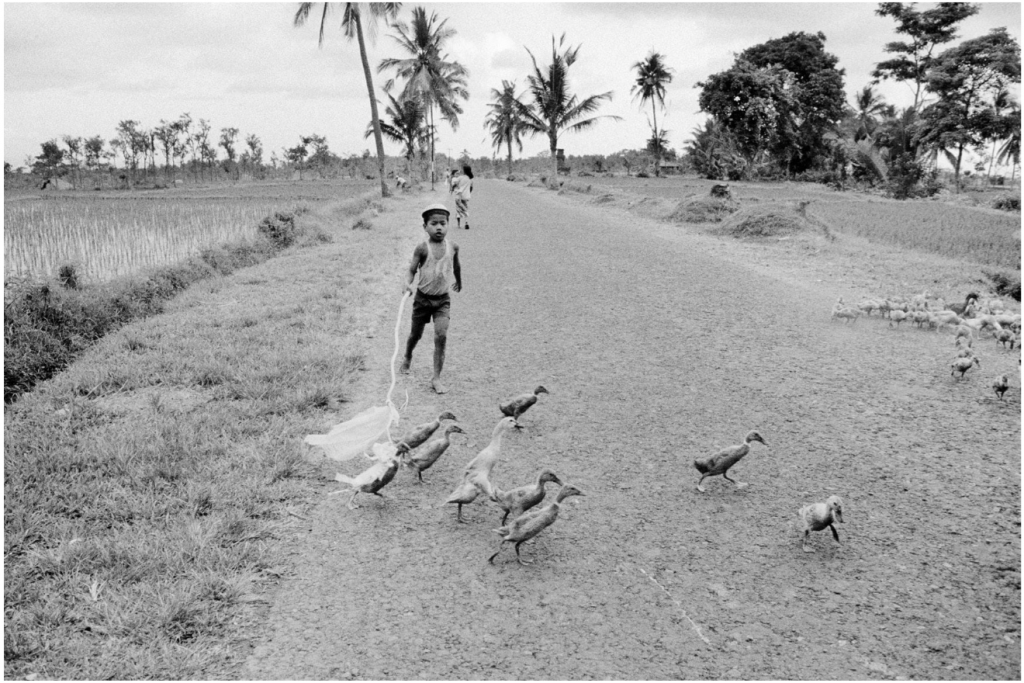 Wim Wenders, Boy with ducks, Bali, 1978, Silver gelatin on Baryt paper framed behind glass on Alu Dibond 40 x 60 cm, Courtesy Blain|Southern, © Wim Wenders