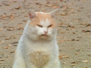 disgusted_cat