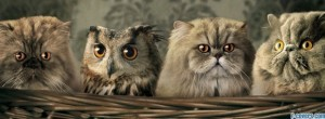 owl-cats-facebook-cover-timeline-banner-for-fb