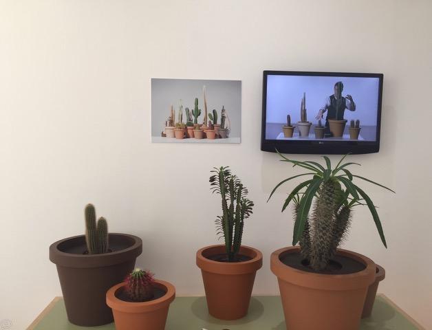 singing_Cactus