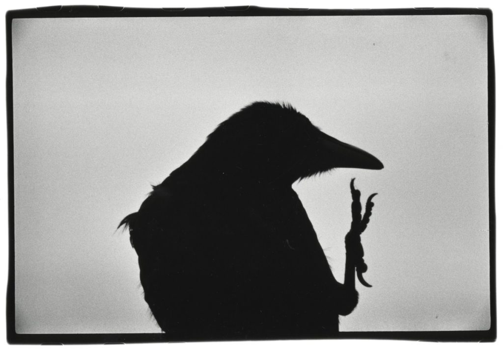 top 5 ravens